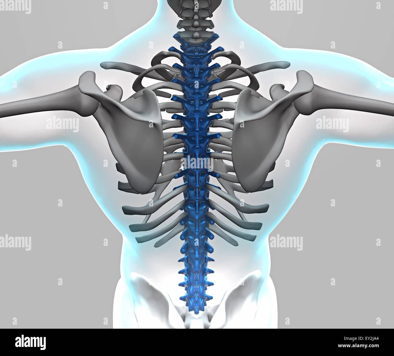 3d X ray of human body and skeleton Stock Photo: 85495484