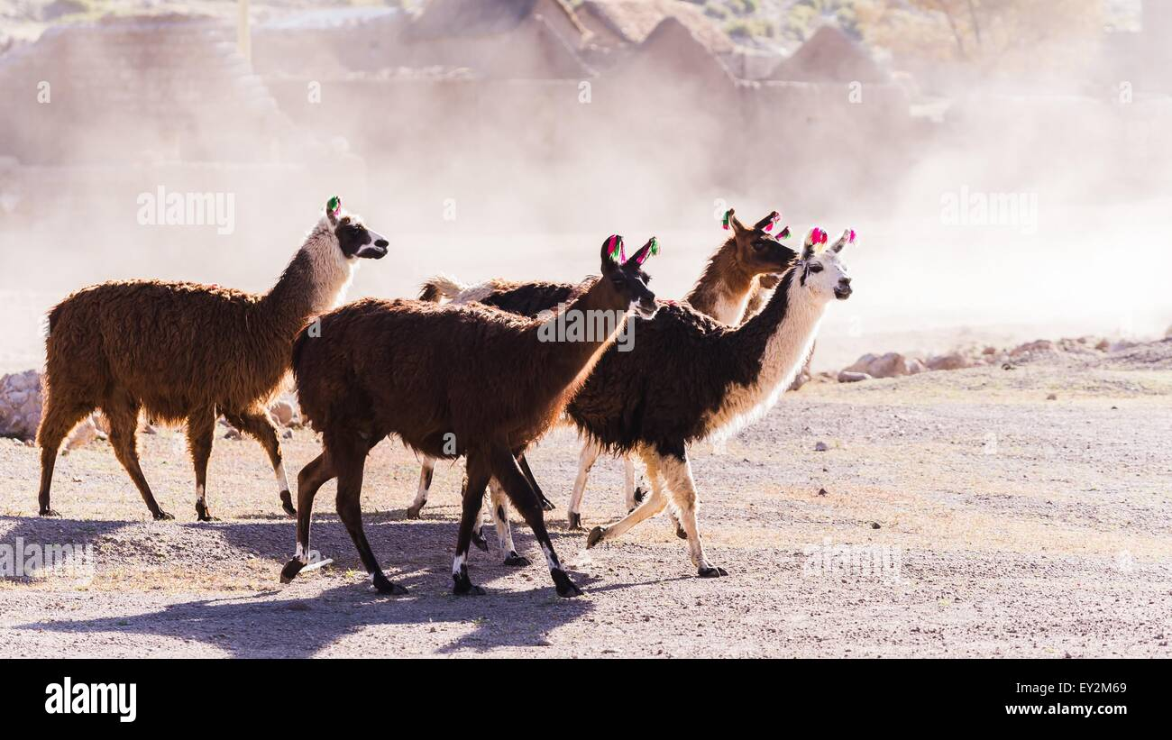 exploring bolivia - Stock Image