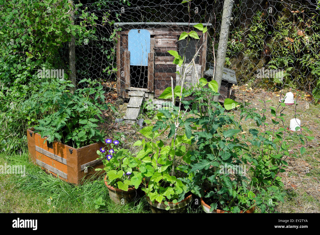small garden on smallholding with chicken coop shed house and stock