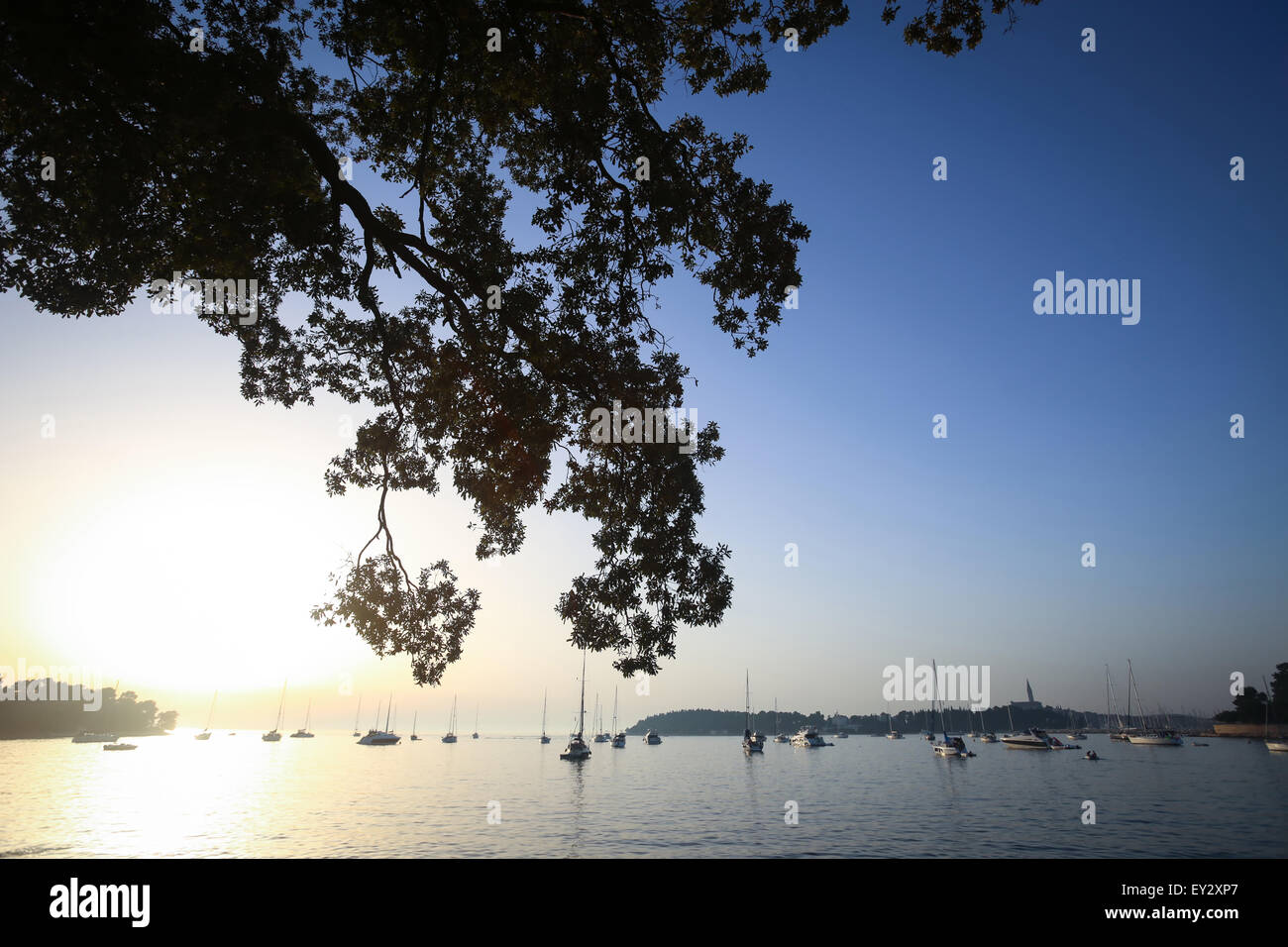A view of a group of sailboats anchored in the Adriatic sea with silhouette of a tree branch at sunset in Rovinj, - Stock Image