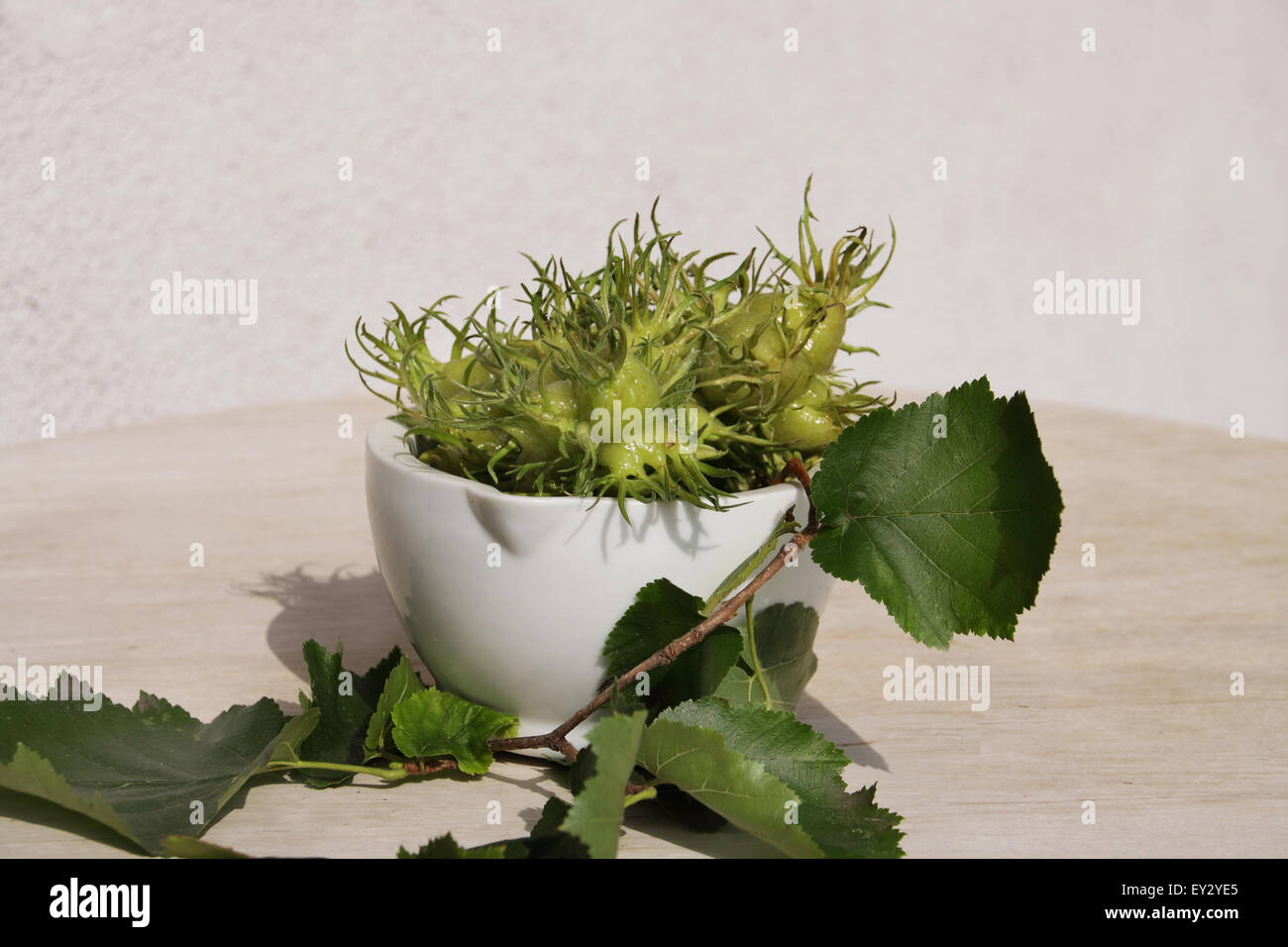 Hazel nut fruits in a white bowl on white backdrop - Stock Image