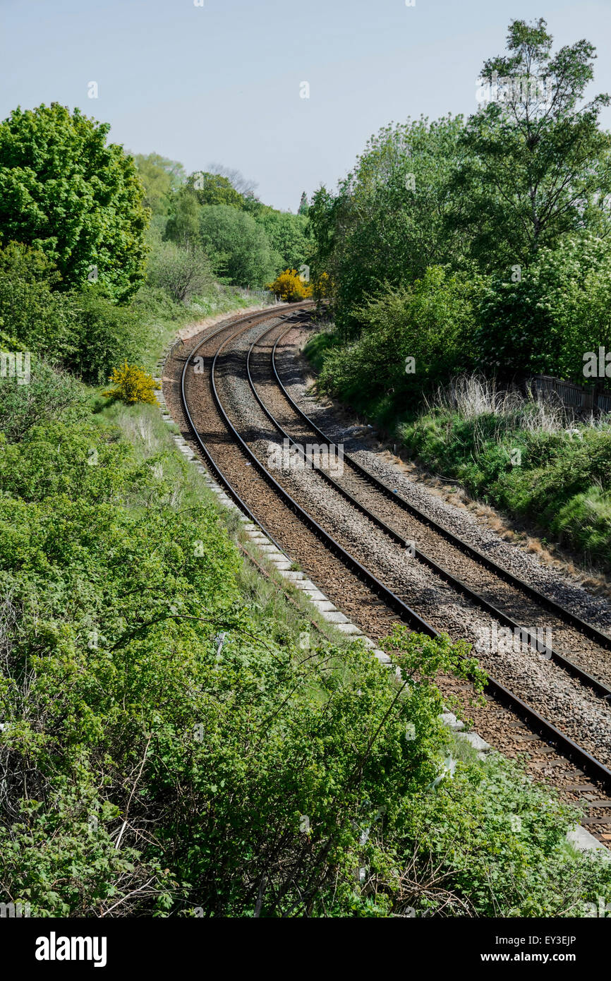 Railway tracks disappearing round a bend, with typical wild trackside plants flourishing in summer. - Stock Image