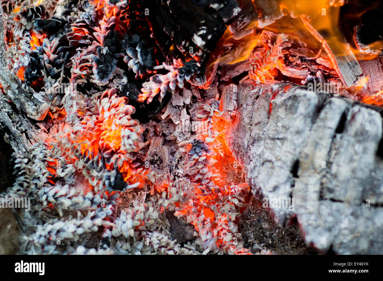 Burning pinecones in the fall brush fire - Stock Image