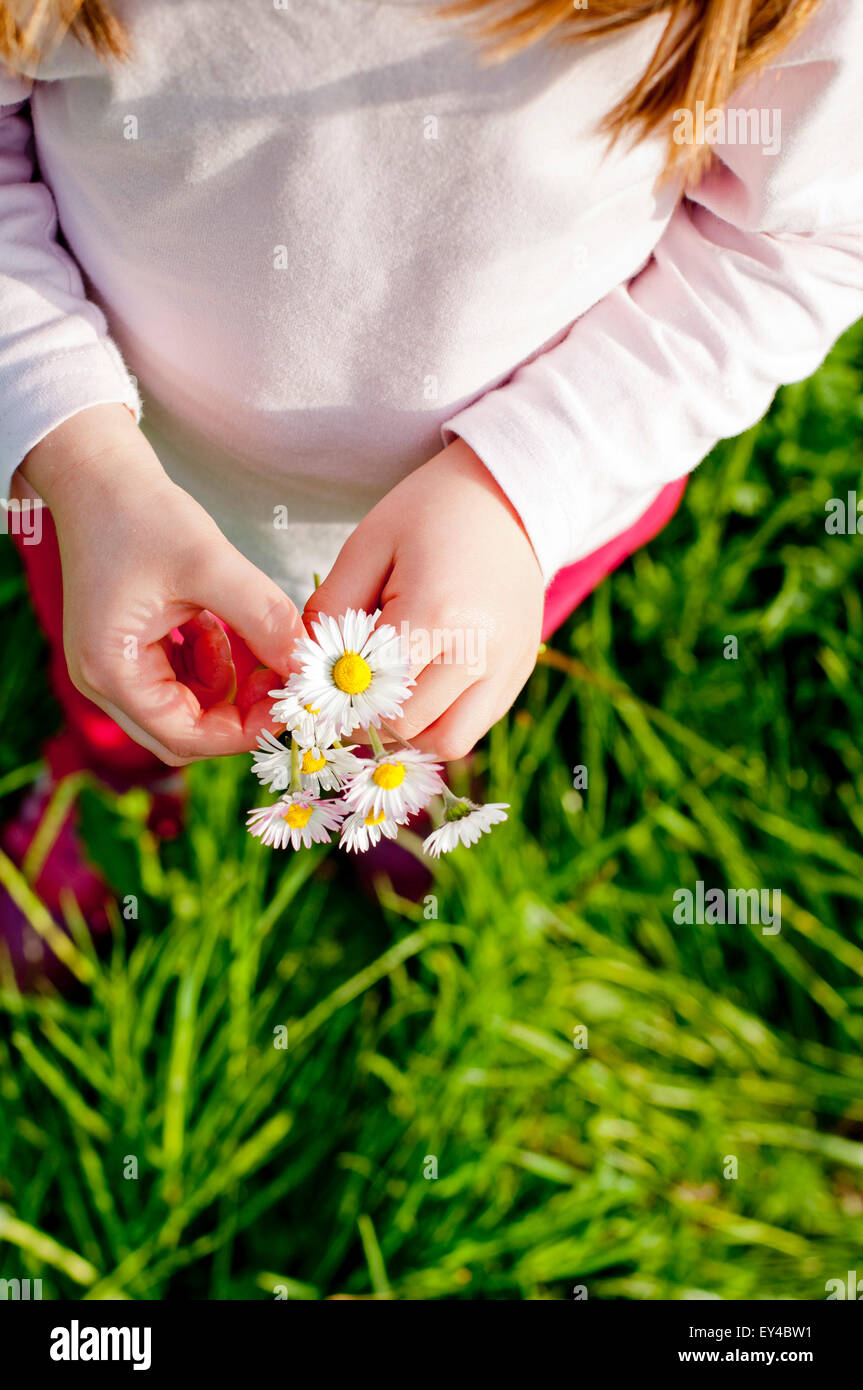 Young Girl Holding Daisies, High Angle View - Stock Image