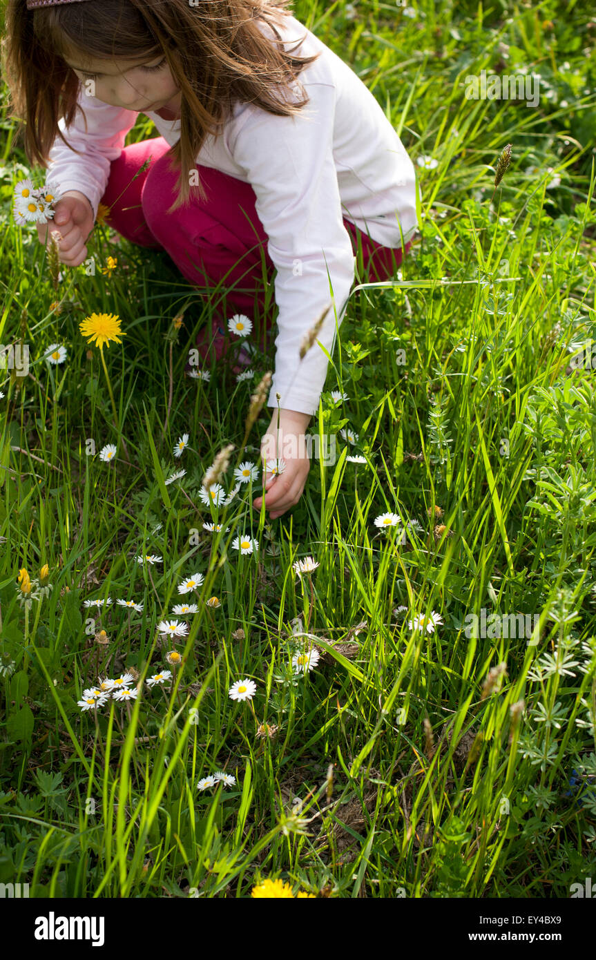 Young Girl Picking Daisies in Field - Stock Image