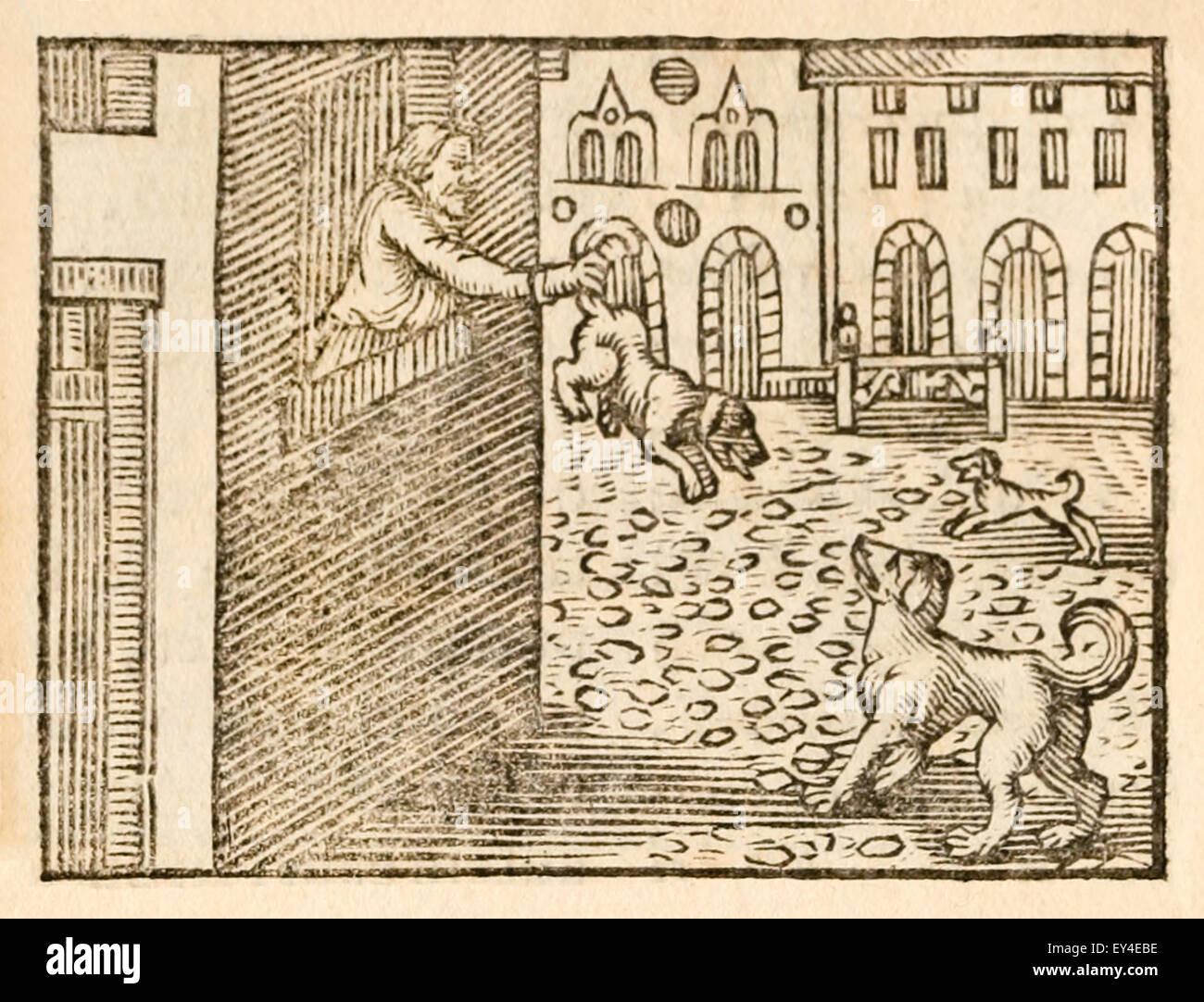 'The Dog and the Cook' fable by Aesop (circa 600BC). A Dog invited another to the feast. The visiting Dog - Stock Image