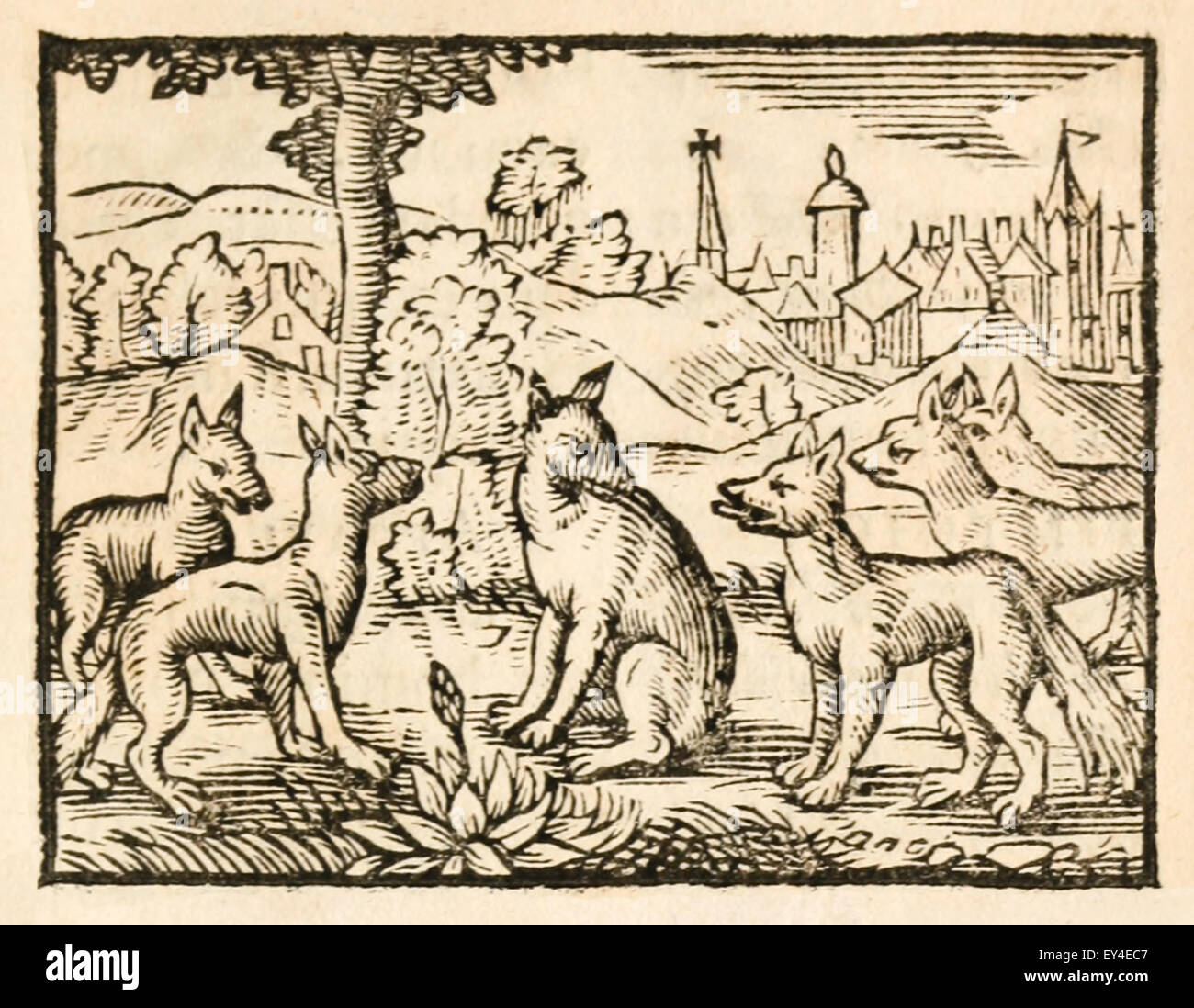 'The Foxes and their Tails' fable by Aesop (circa 600BC). A fox got its tail cut off and tried to persuade - Stock Image