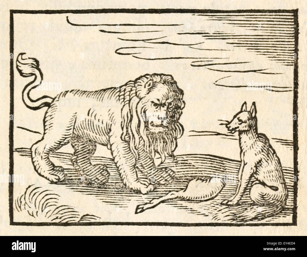 'The Lion and the Fox' fable by Aesop (circa 600BC). 17th century woodcut print illustrating Aesop's - Stock Image