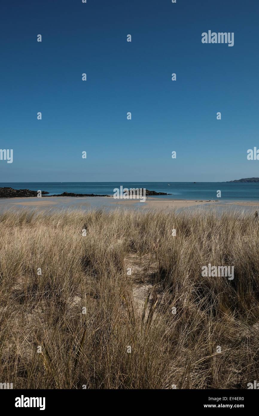 Marram grass in sand dunes at Herm island Guernsey - Stock Image