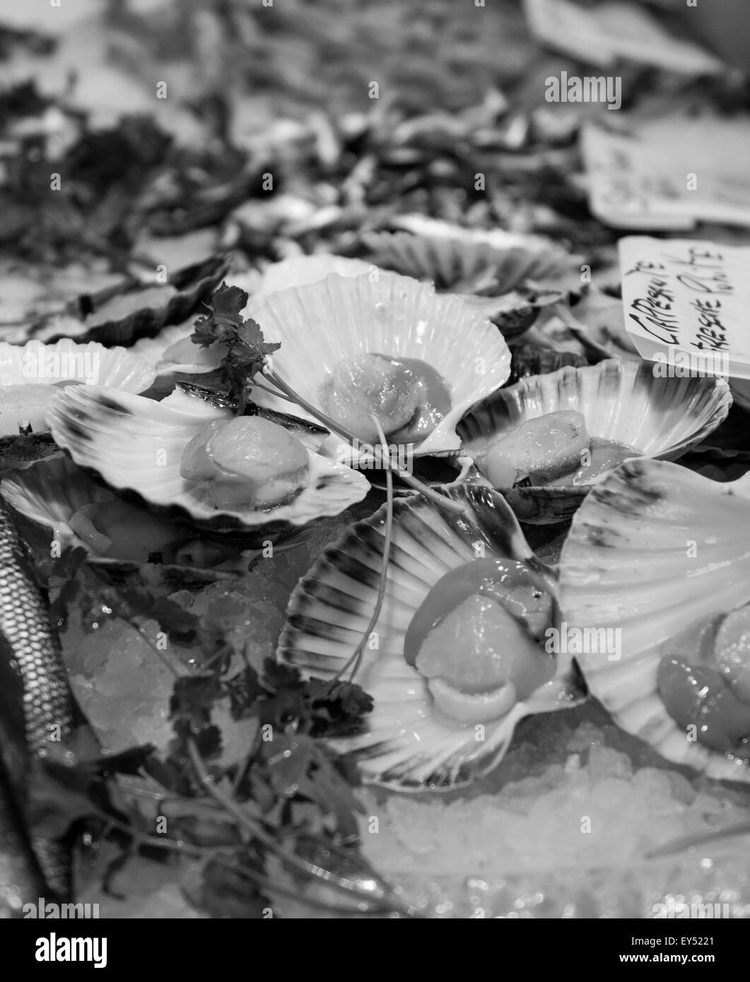Mercato di Rialto Fresh Fish Market, Scallops, Venice, Italy - Stock Image