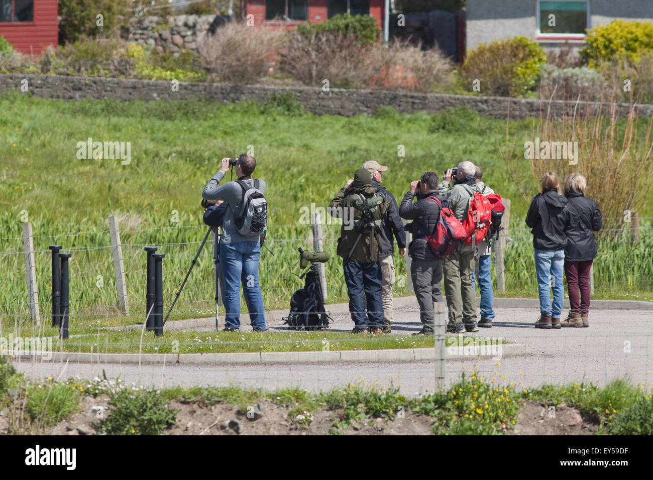 Bird Watchers. Day visiting to Iona, via ferry from Mull. Searching for noisy but elusive Corncrake (Crex crex). - Stock Image