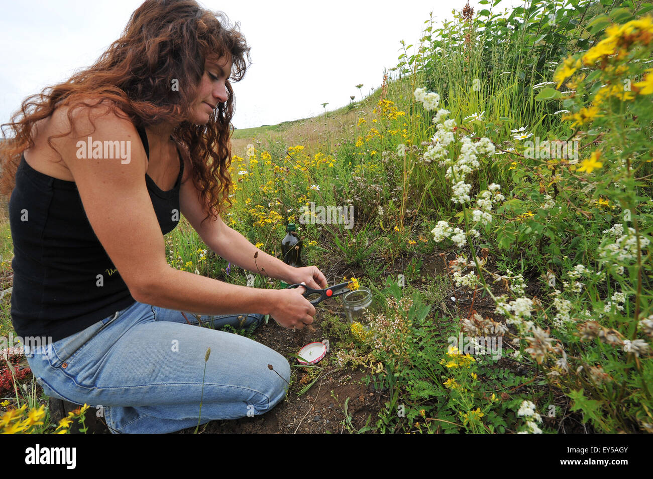Herbalist collecting - Auvergne France Laure Barthomeuf Stock Photo