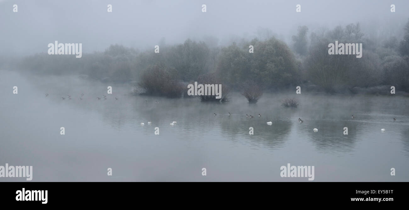 Sauer Delta in Autumn - Alsace France tributary of the Rhine Stock Photo