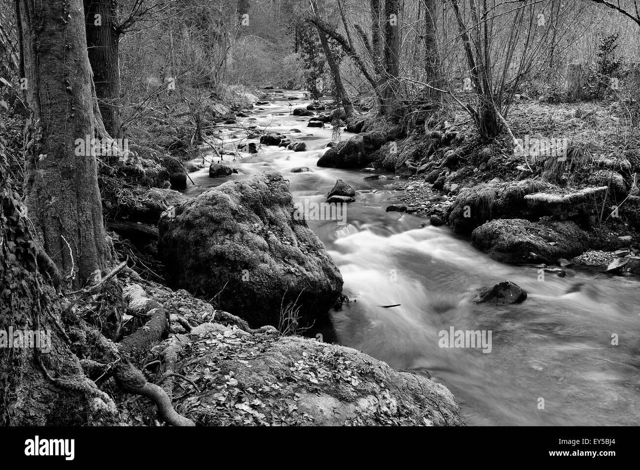 Jonen river undergrowth - Canton of Zurich Switzerland Stock Photo