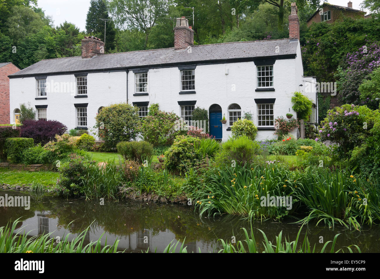 Row of White painted cottages by the pond Lymm Cheshire England - Stock Image