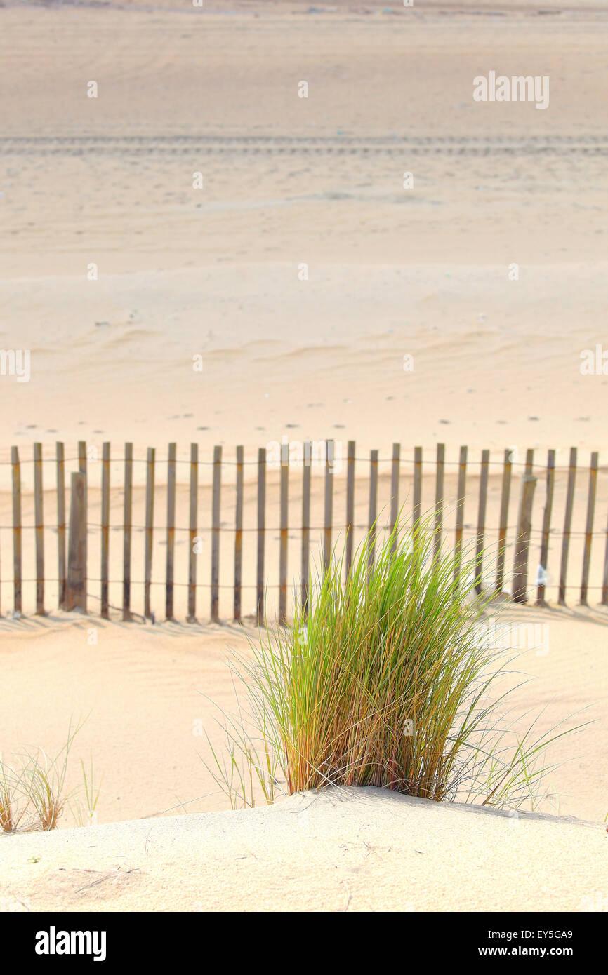 Marram and ganivelle fight against dune erosion - France - Stock Image