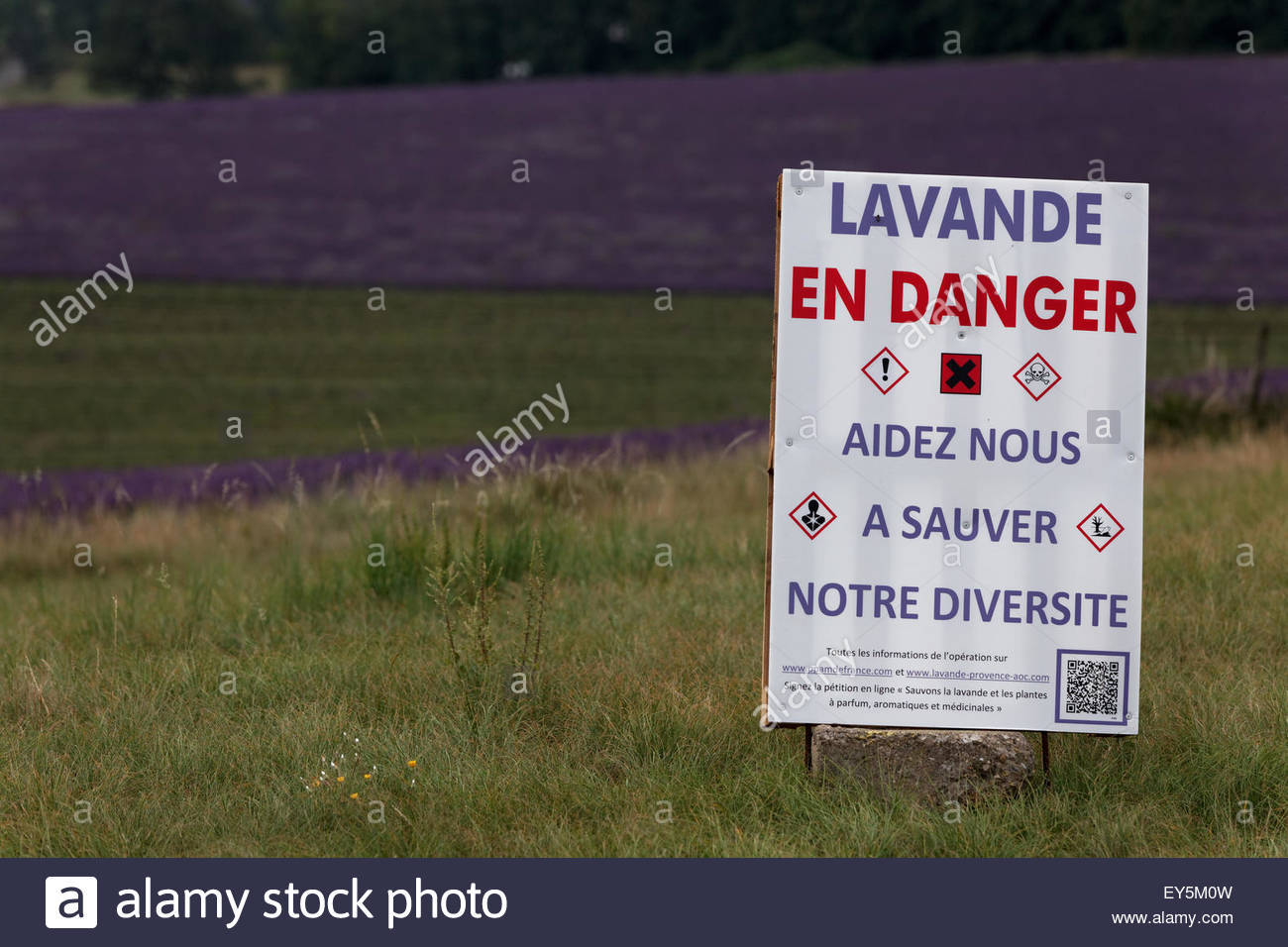 Sign against REACH regulation and lavender field - France - Stock Image