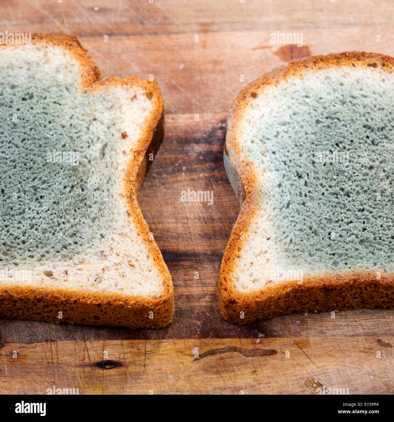 Mould growing rapidly on mouldy bread in green and white spores - Stock Image