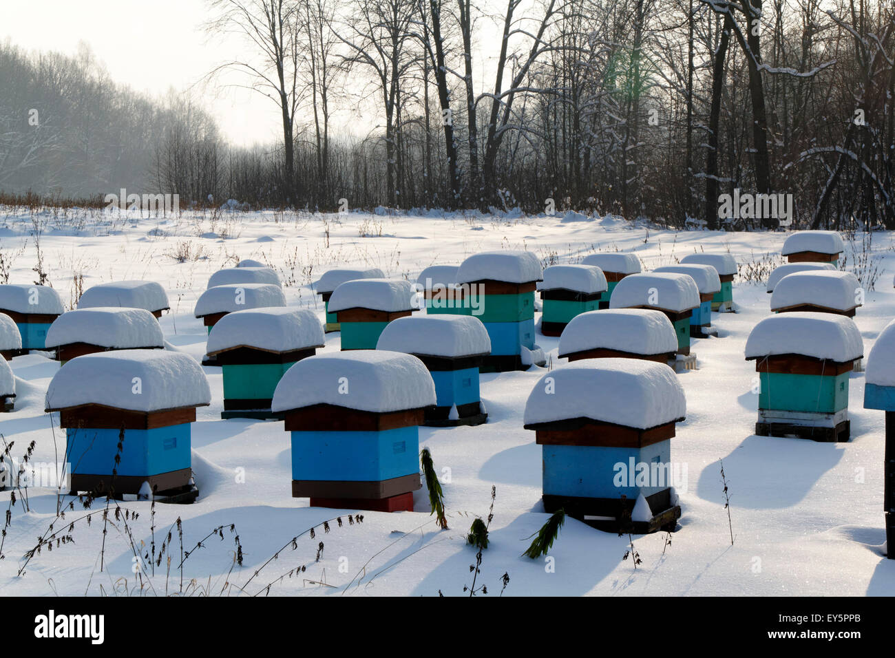Hives at Winter - Stock Image