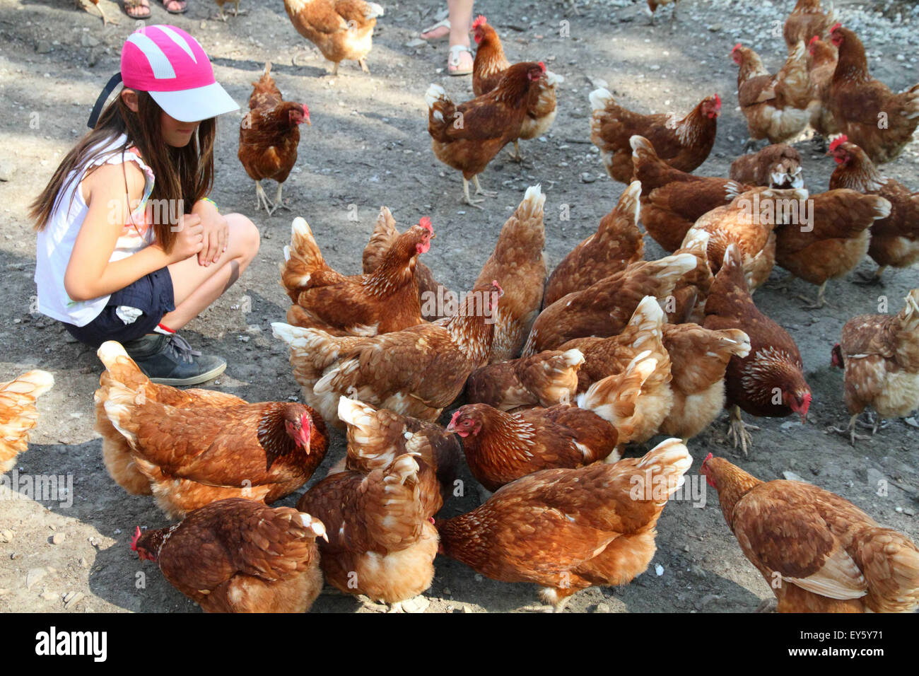 Girl and Hens Isabrown - France - Stock Image