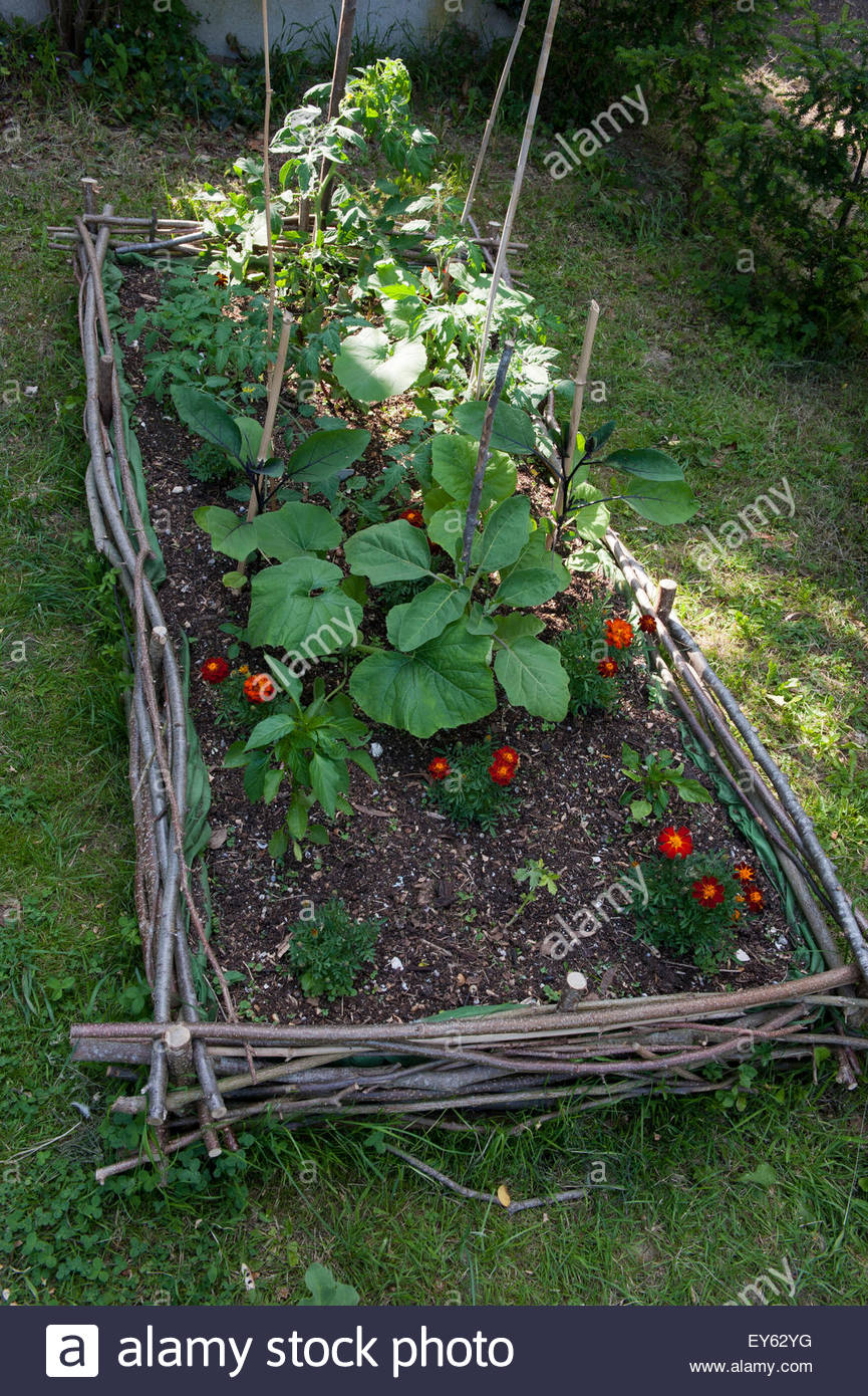Filbert and dogwood hedge laying kitchen garden - Stock Image