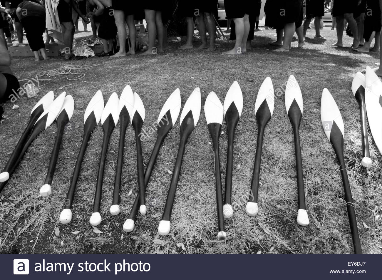 Oars used on waka (traditional Maori canoe) at Waitangi Day annual commemorations on Waitangi Treaty Grounds, Bay Stock Photo