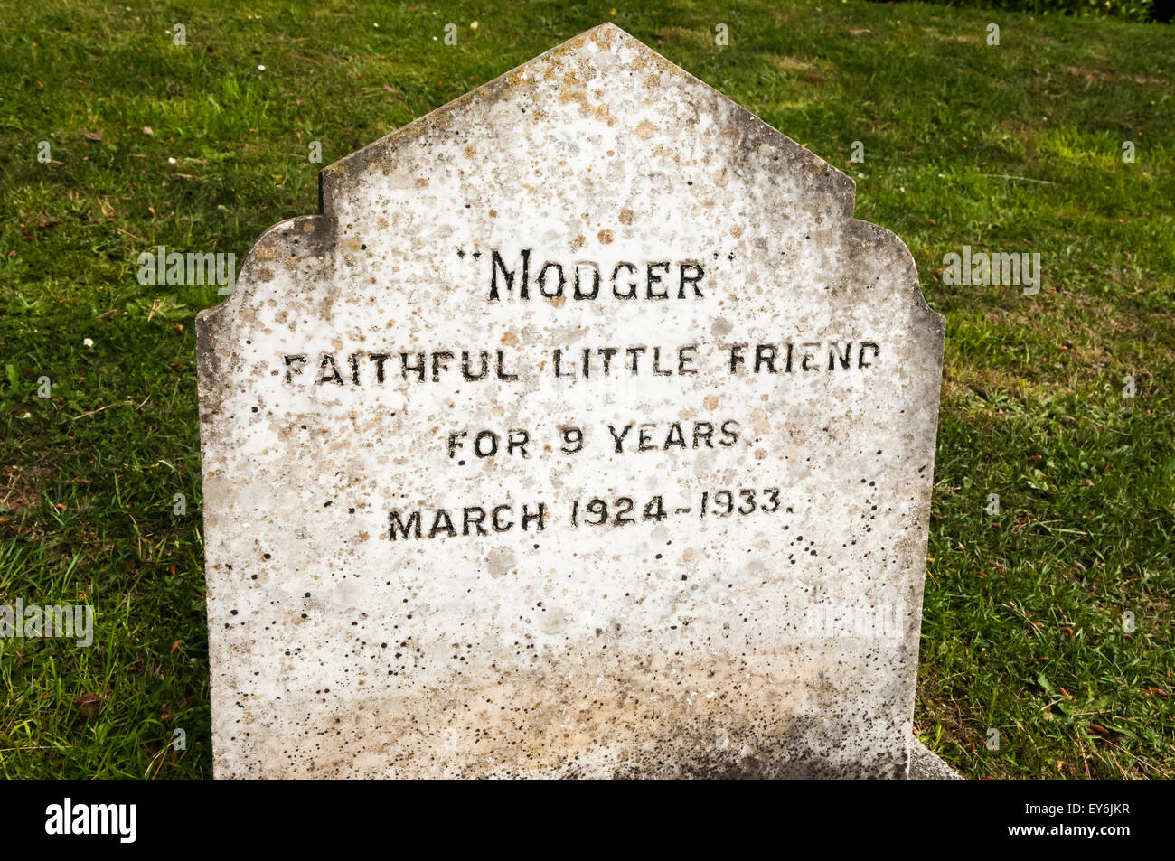 Gravestone for a dog named 'Modger - Faithful Little Friend' in a pet cemetery - Stock Image