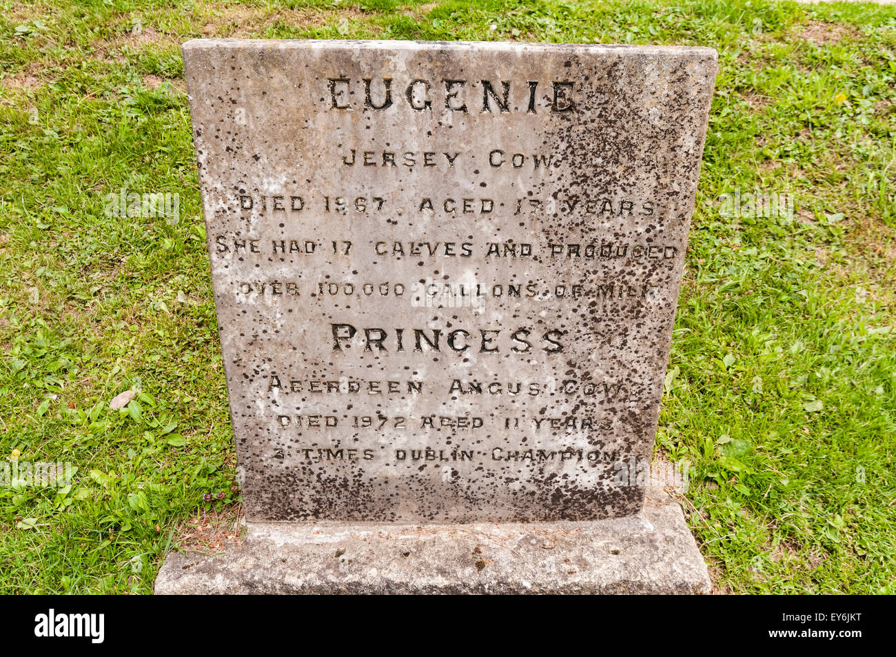 "Gravestone for Jersey cow ""Eugenie"" and Aberdeen Angus ""Princess"" in a pet cemetery Stock Photo"