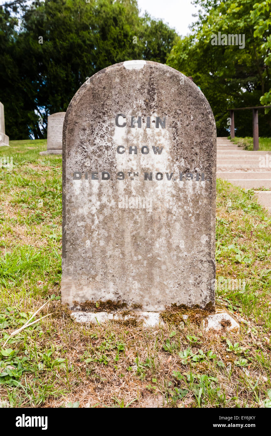 Gravestones for 'Chin', a pet dog in a pet cemetery - Stock Image