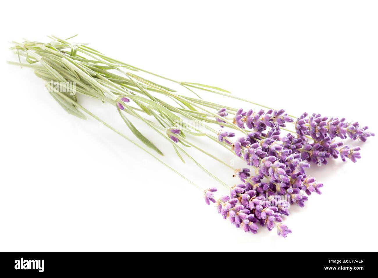 Lavender flowers - Stock Image