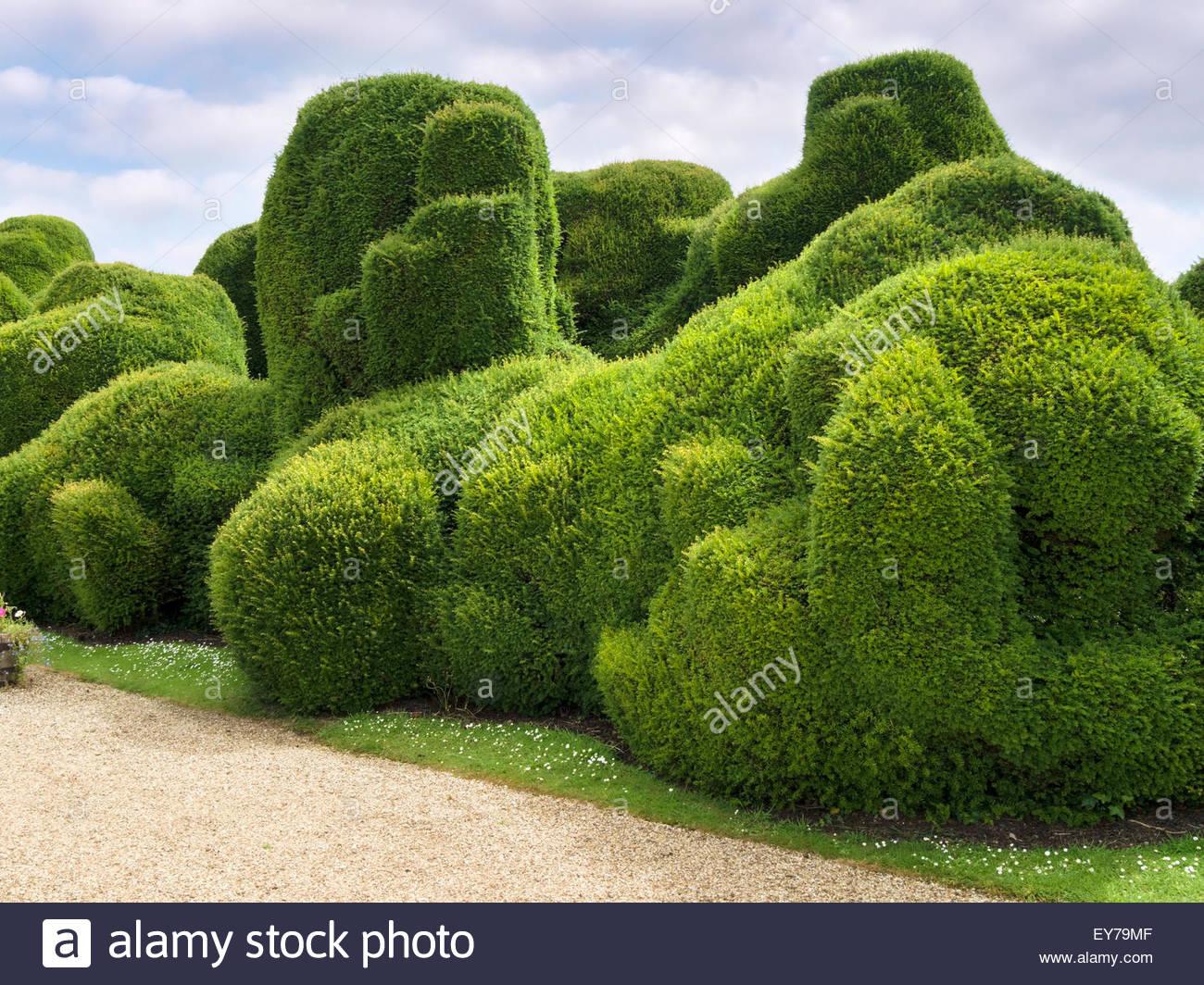 Elephant hedge in landscaped gardens of Rockingham Castle, Northamptonshire, England, UK. - Stock Image