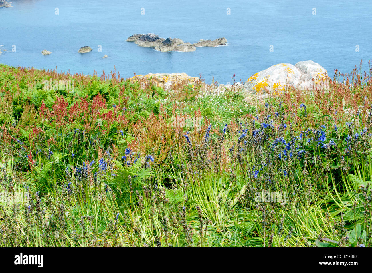 Summer on the coast in Co Wexford, Ireland - Stock Image