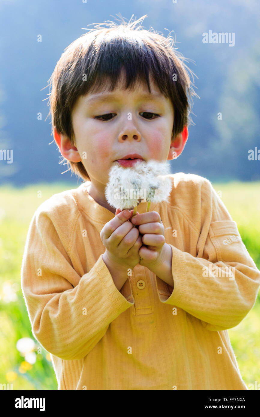 4 to 6 year old Caucasian child, boy, outdoor. Face, holding dandelions in both hands, blowing and scattering them, - Stock Image