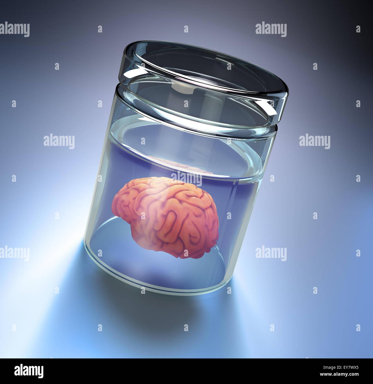 Human brain in a large jar - Stock Image