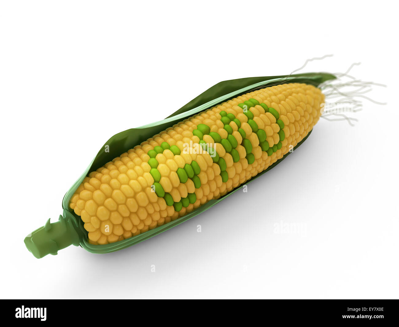 GMO corn  -agricultural genetics research - Stock Image