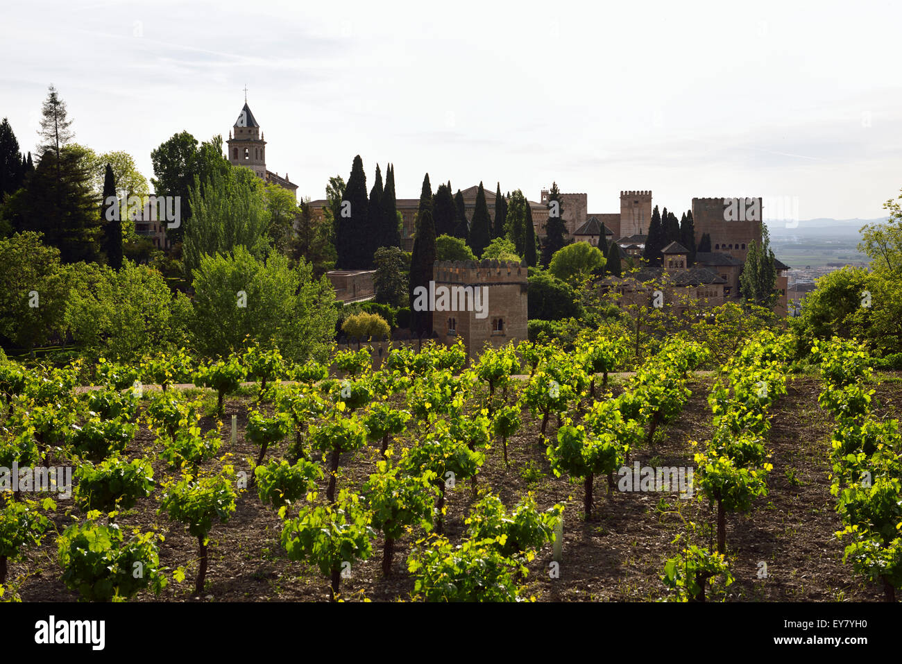 Generalife Vineyard overlooking Saint Mary belfry and Nesrid Palaces in fortified Alhambra complex Granada Spain - Stock Image