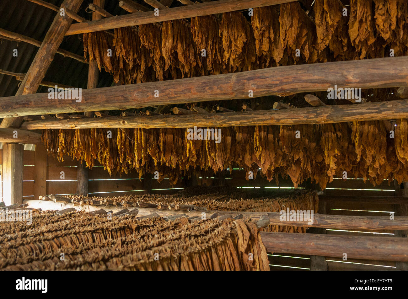 Cuban Cigar Tobacco Leaves Drying, Vinales, Cuba - Stock Image