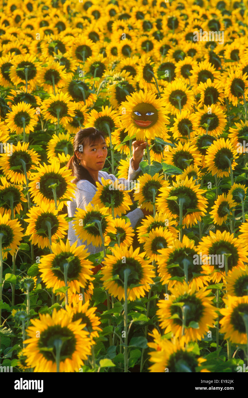 Woman with individual sunflower looking opposite the crowd of faceless sunflowers symbolizing one in a million - Stock Image