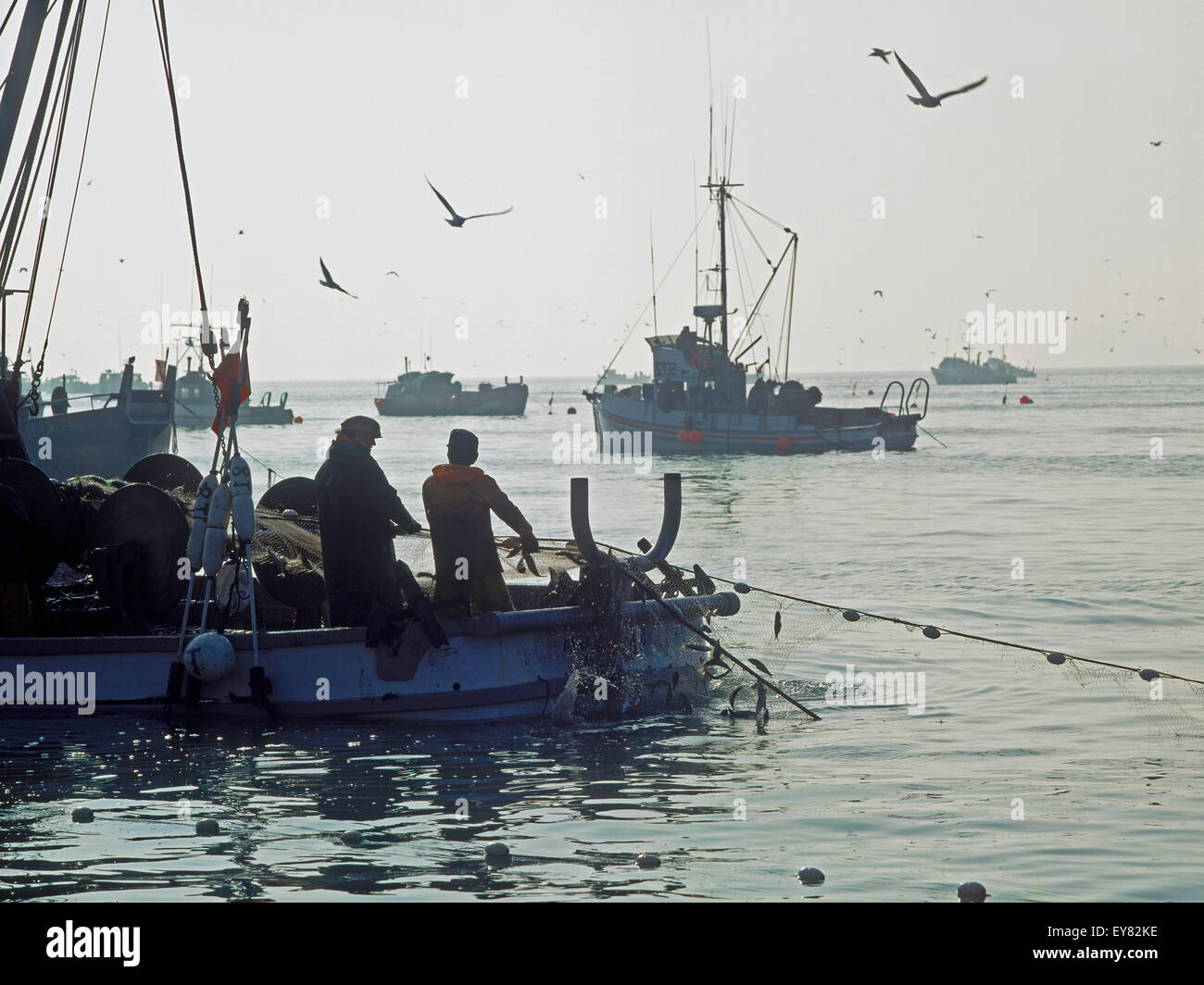 Fishermen loading nets full of herring off Sausalito, California - Stock Image