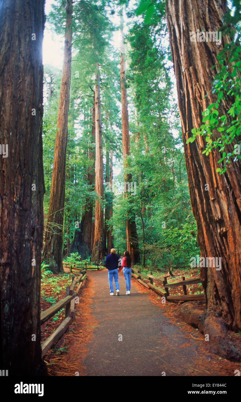 Couple in Muir Woods among Giant Sequoia trees in Marin County, California - Stock Image