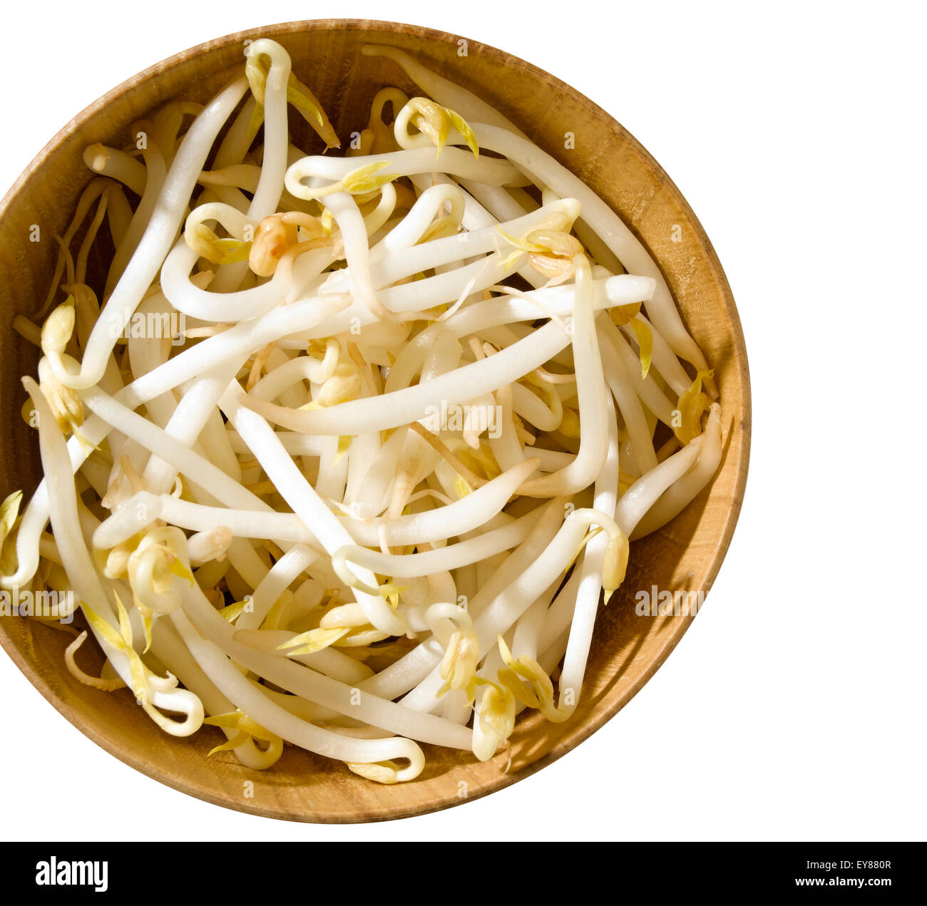 bean sprouts isolated - Stock Image