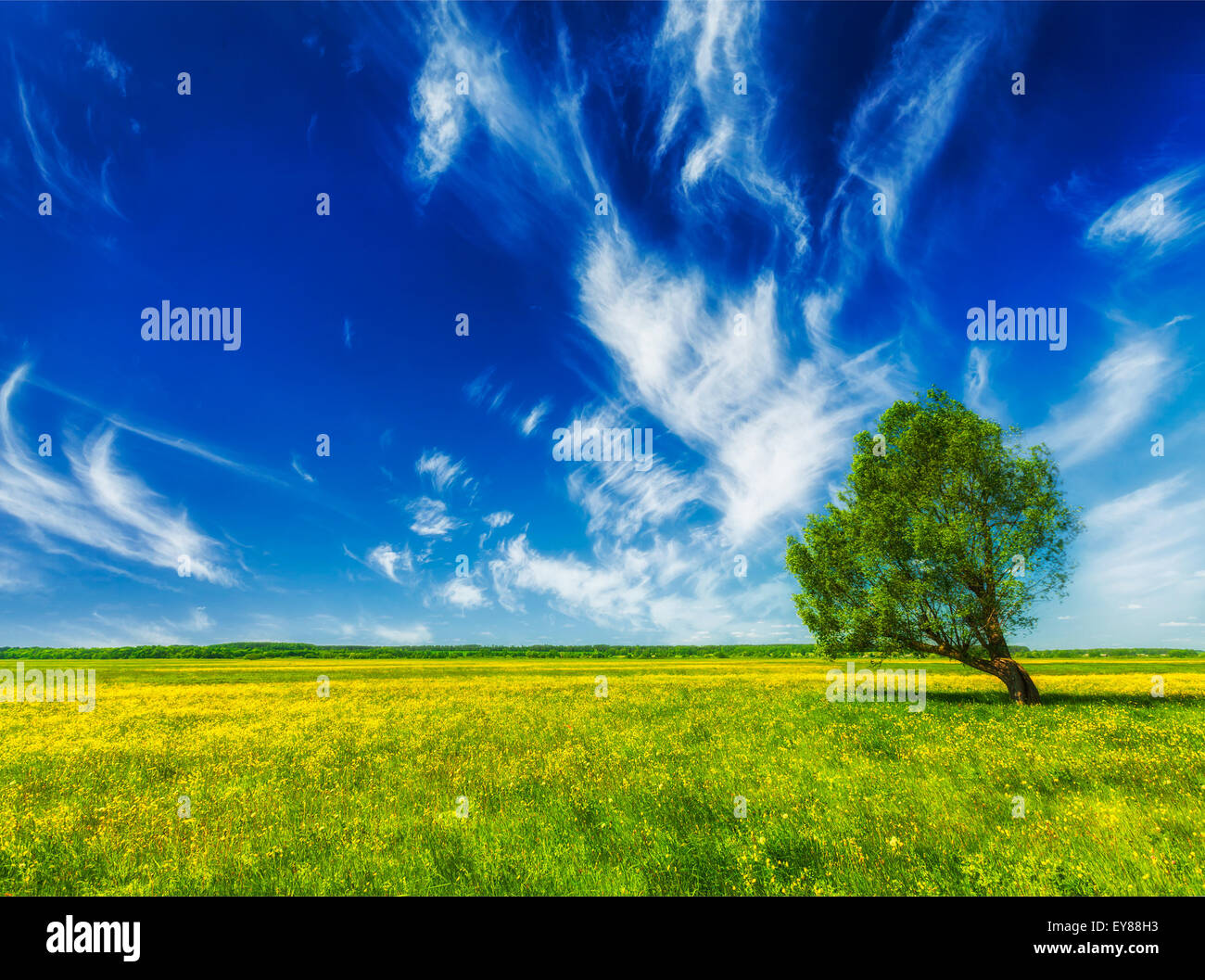 green grass blue sky flowers flower wallpaper spring summer background blooming flowers green grass field meadow scenery landscape under blue sky with single lonely tree