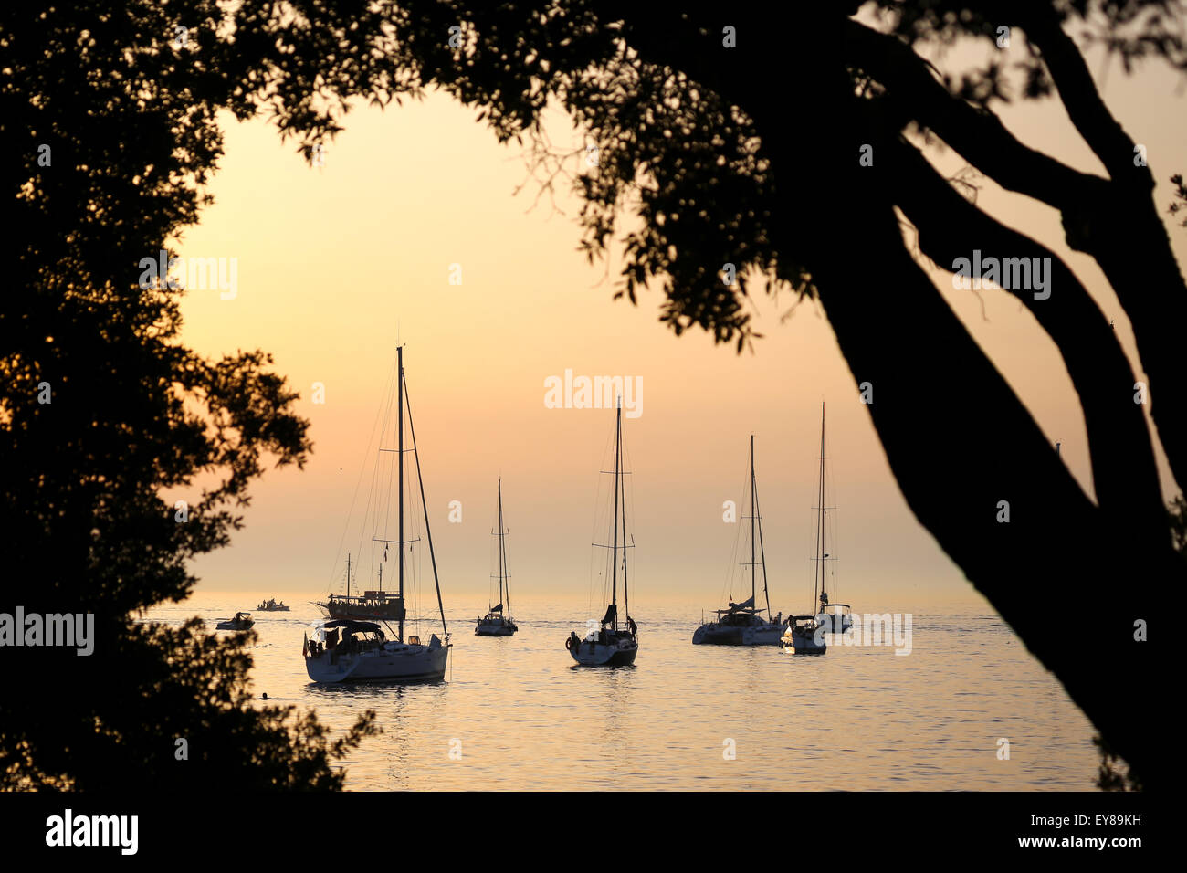 A view of a group of sailboats anchored in the Adriatic sea at sunset in Rovinj, Croatia. - Stock Image