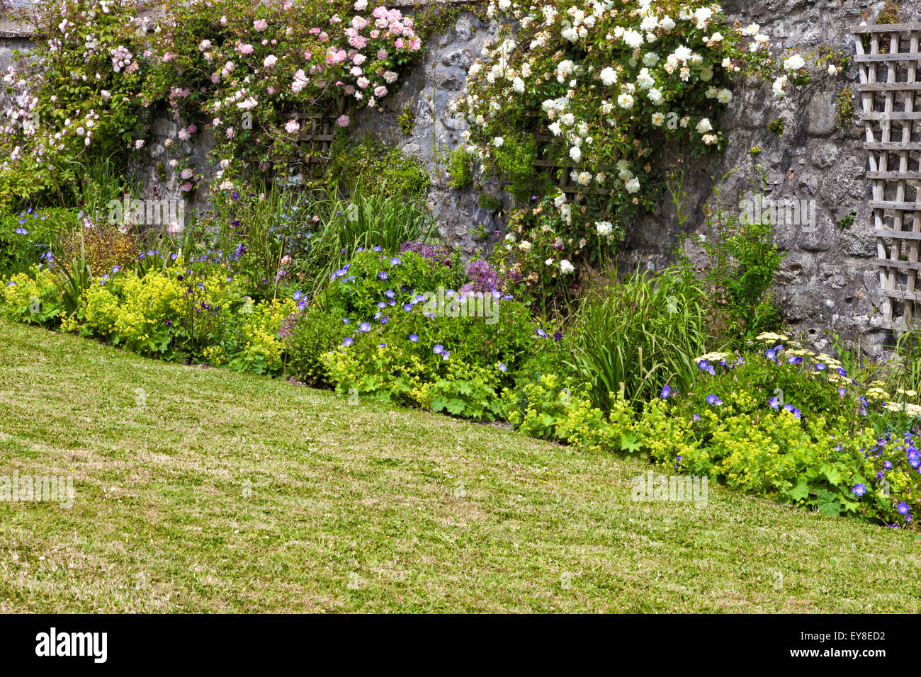 Cottage Garden Colourful Flowers Pink And White Climbing Roses On