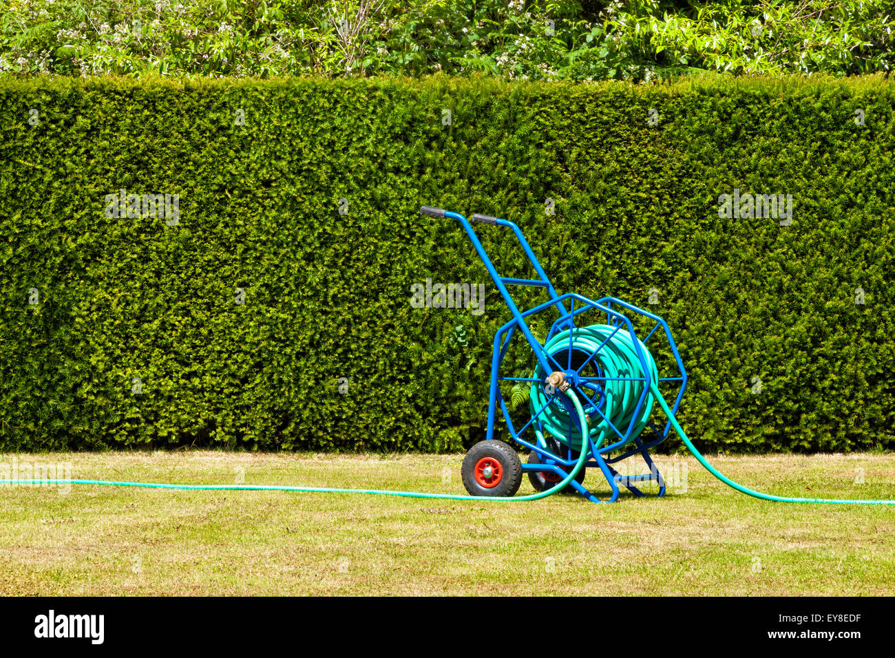 Blue heavy duty garden hose reel, trolley for garden watering on dried out lawn that suffered from drought - Stock Image