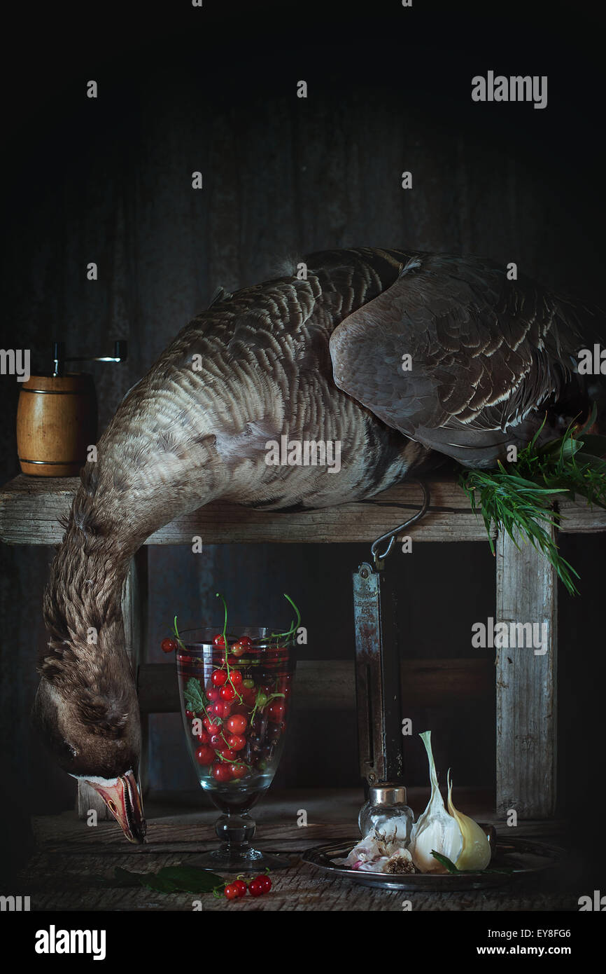 Still life with greylag - Stock Image