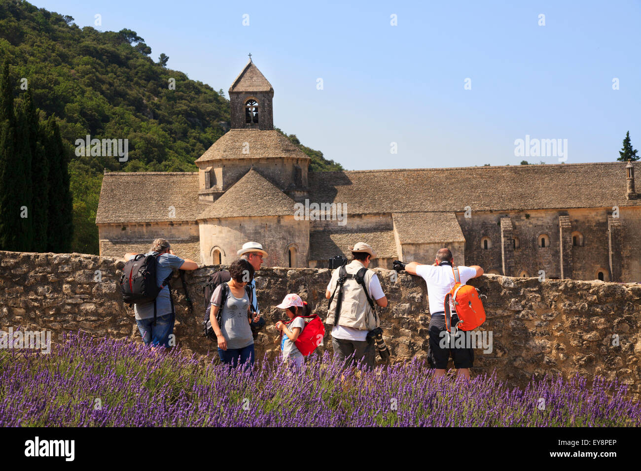 Photographers lean over the wall to  photograph the lavender in front of the Notre-Dame de Sénanque Abbey Provence - Stock Image