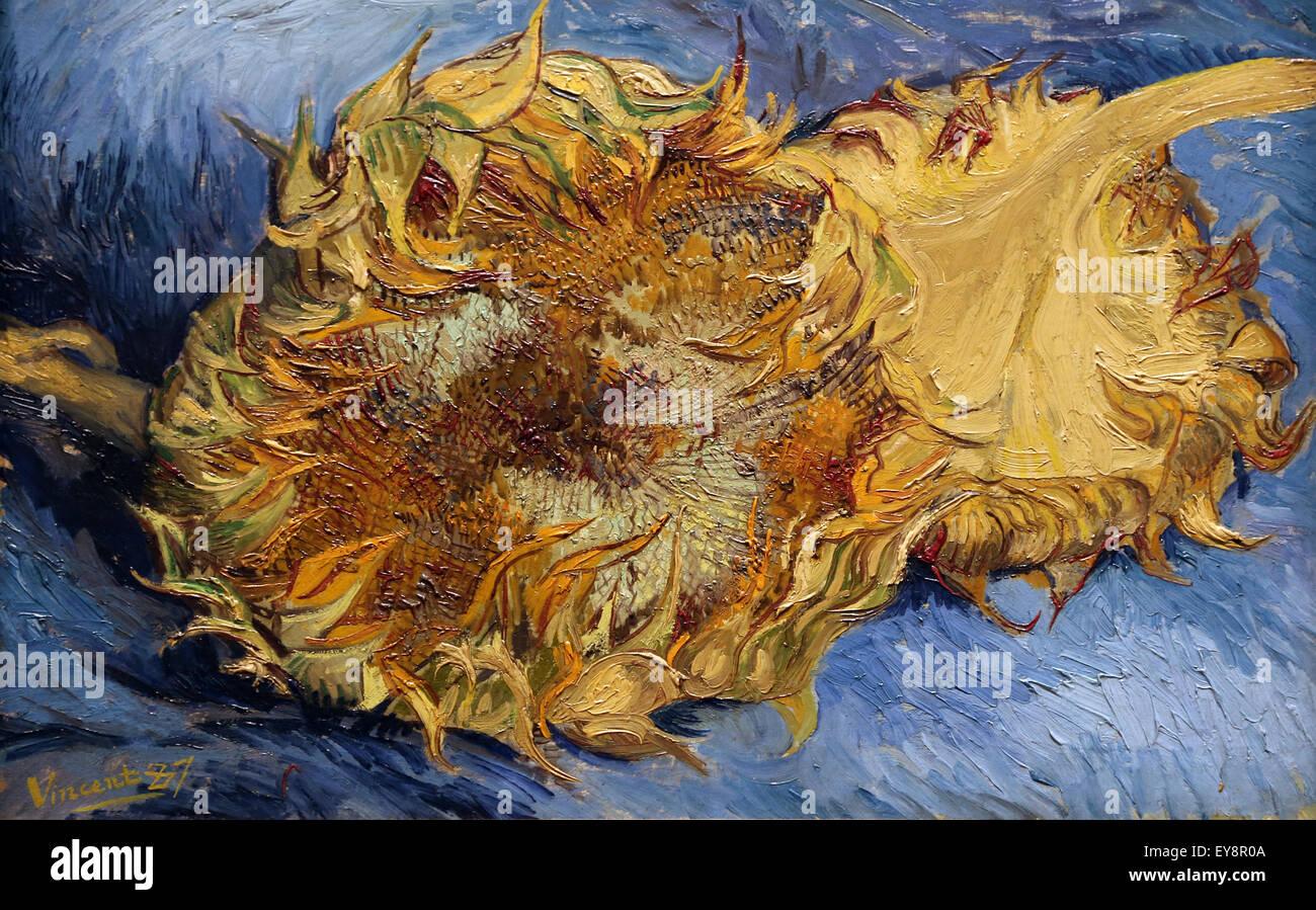 Vincent van Gogh (1853-1890). Sunflowers, 1887. Oil on canvas. Metropolitan Museum of Art. NY. USA. - Stock Image