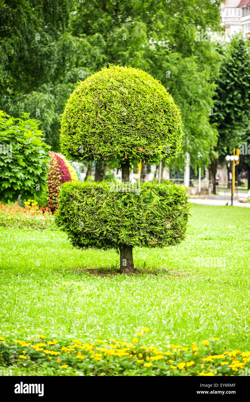 Landscape Design In Park Beautifully Trimmed Thuja Tree Flowers And Stock Photo Alamy