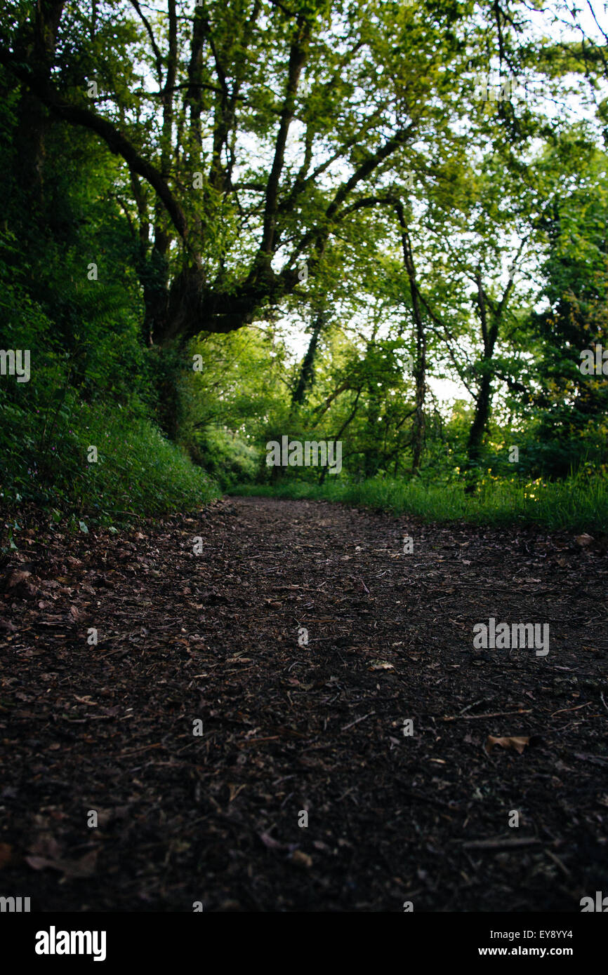 Empty trail through the woods on the Camino De Santiago. - Stock Image